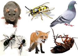 pest controllers for fox rats mice wasps flies pigeons pest birds ants insects cockroaches